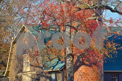 DSC_0078 Barn w Silo Fall Trees CU Dec 3 2016