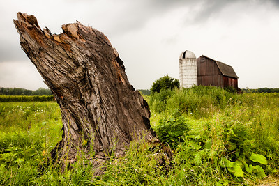 tree stump and barn