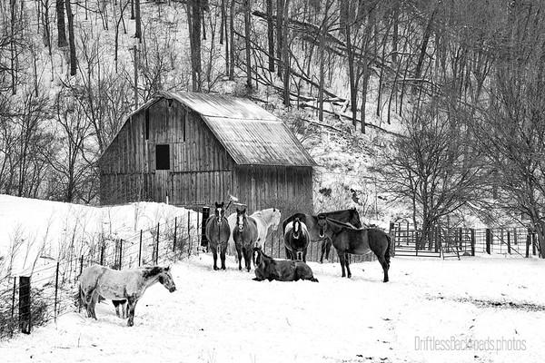Horses and Their Barn