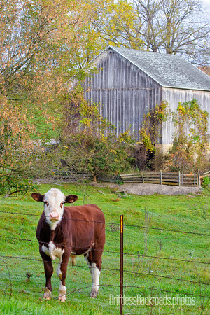 Hereford and Barn