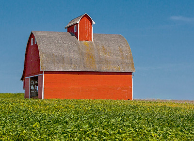 Corncrib in Bean field_3197