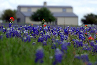 """Bluebonnet Barn"""