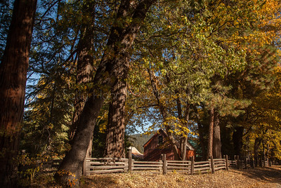 Barn in Fall ~ Sierra Valley Ca.