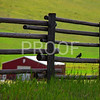 Little black bird on wooden fence