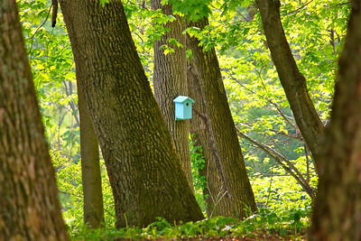 February 27, 2014. I was hiking down to the river when I spotted this little blue birdhouse in the woods, so simple yet so special. No houses were near, it made me wonder who had put it there.