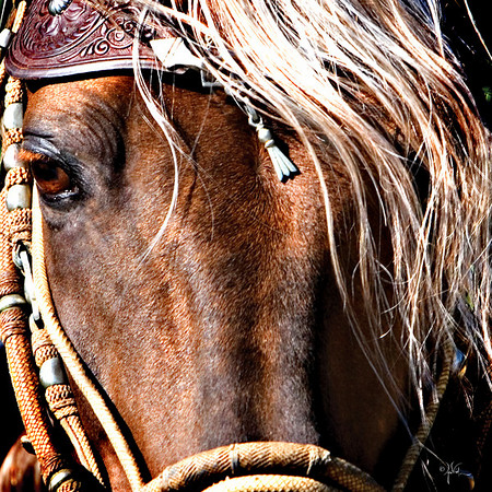 Baroque Horses
