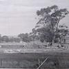 Building of Nuriootpa High School begins 1936  ....