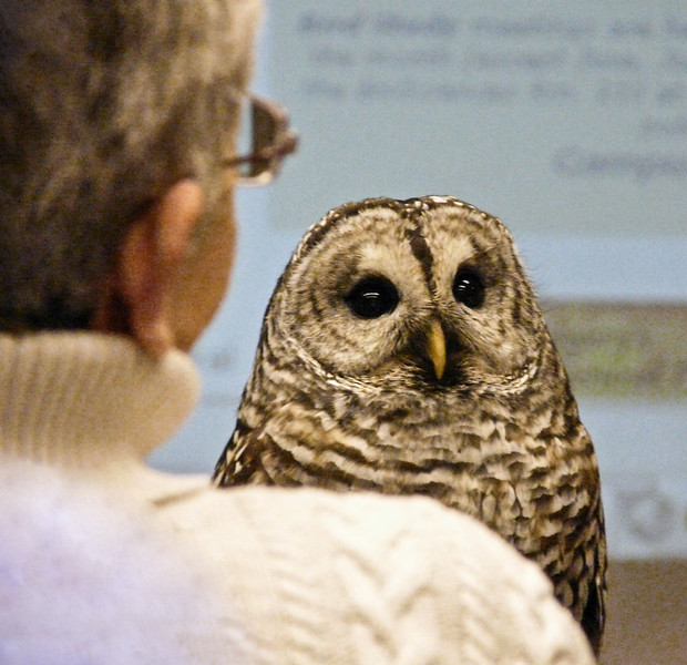 04 Barred Owl as guest at University talk