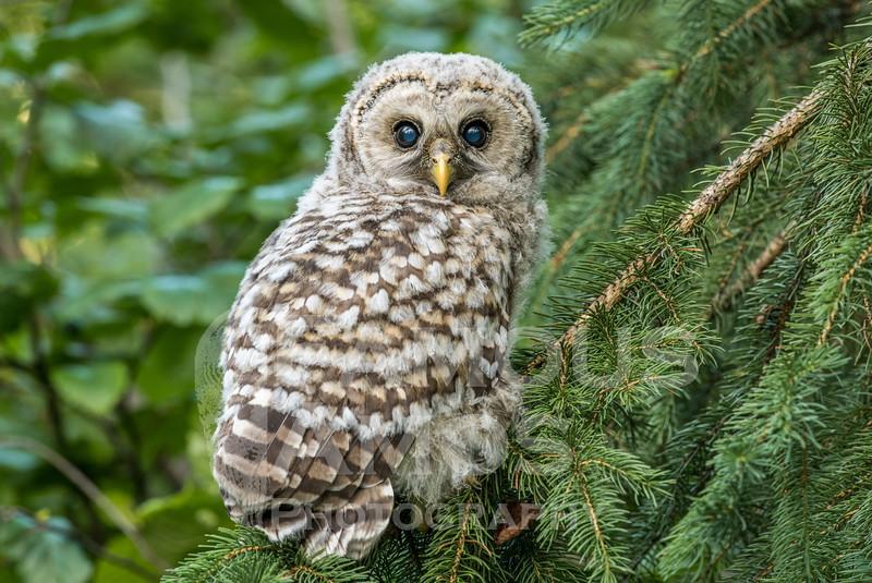 OWL_0719