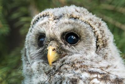 OWL_0701