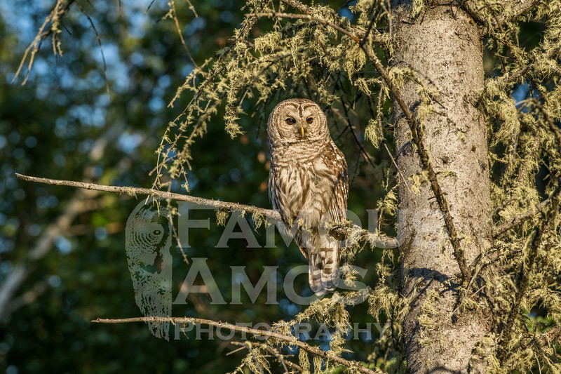 OWL_0763