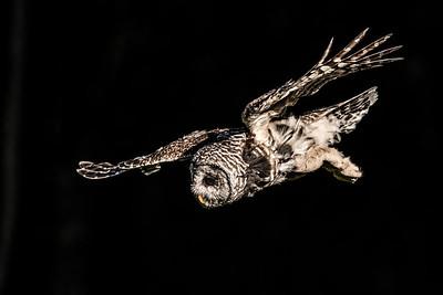 OWL_2487