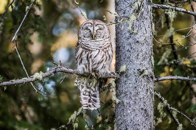 OWL_0273