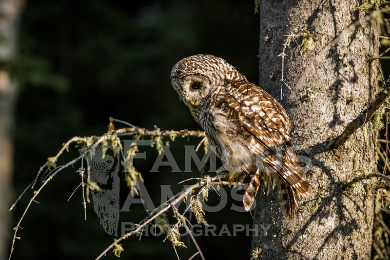 OWL_5934