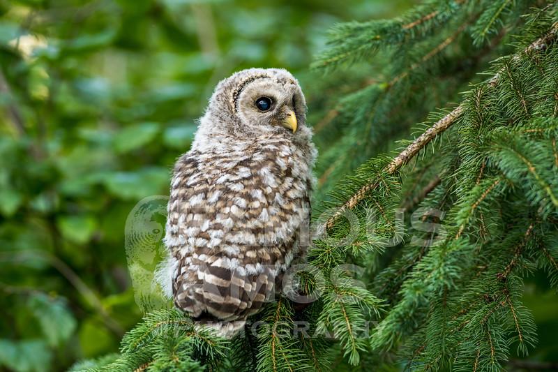 OWL_0651