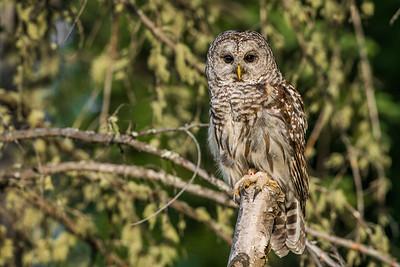 OWL_1221
