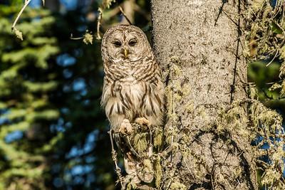 OWL_3575
