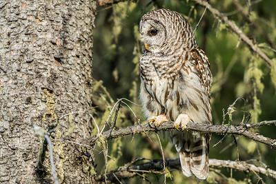 OWL_1145