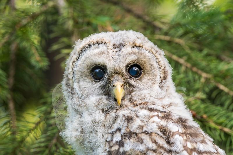 OWL_0693