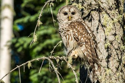 OWL_0137