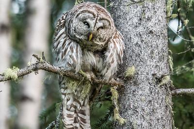 OWL_0327