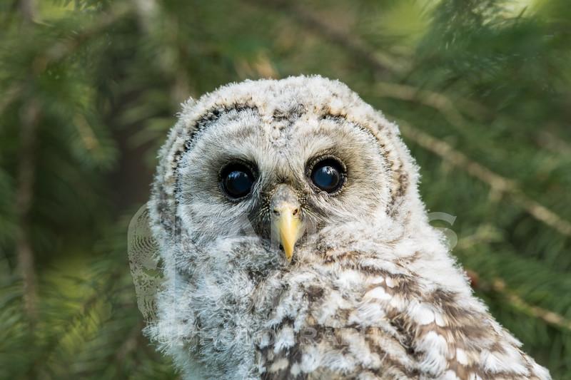 OWL_0698