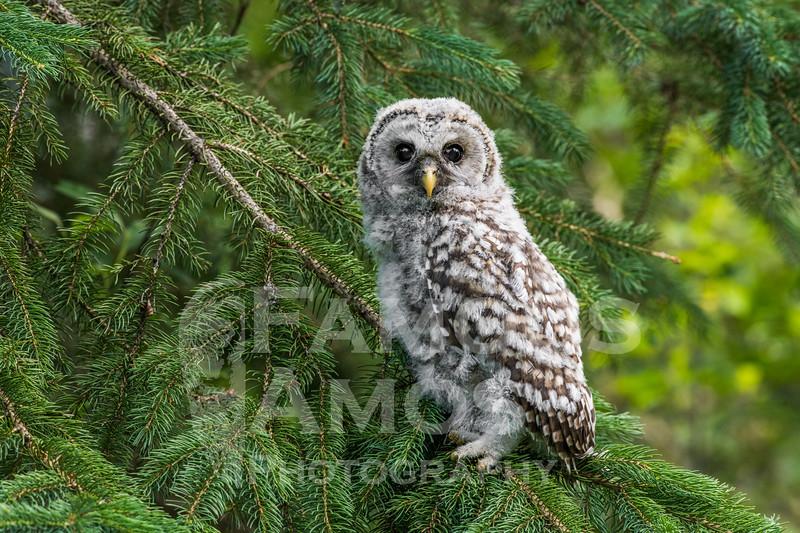 OWL_0736