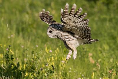 OWL_5866