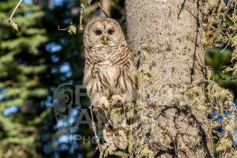 OWL_3563