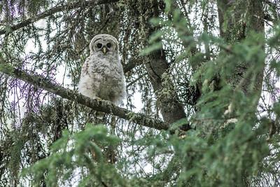 OWL_1045