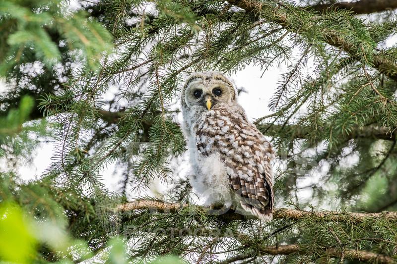 OWL_0566