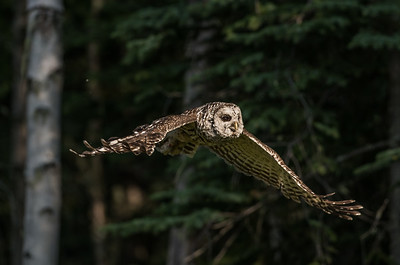 OWL_5894