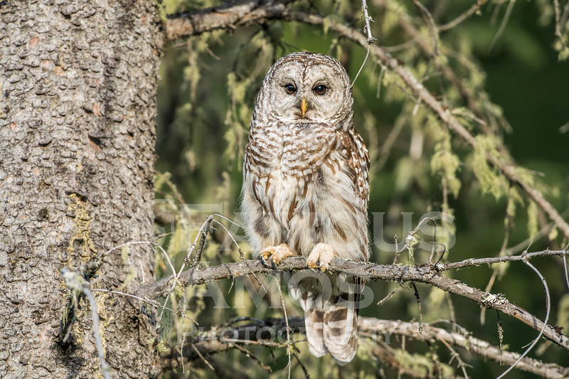 OWL_1156