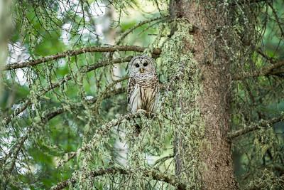OWL_0203