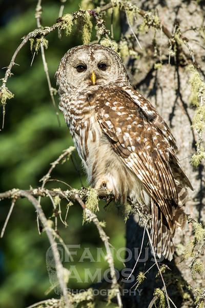 OWL_0110