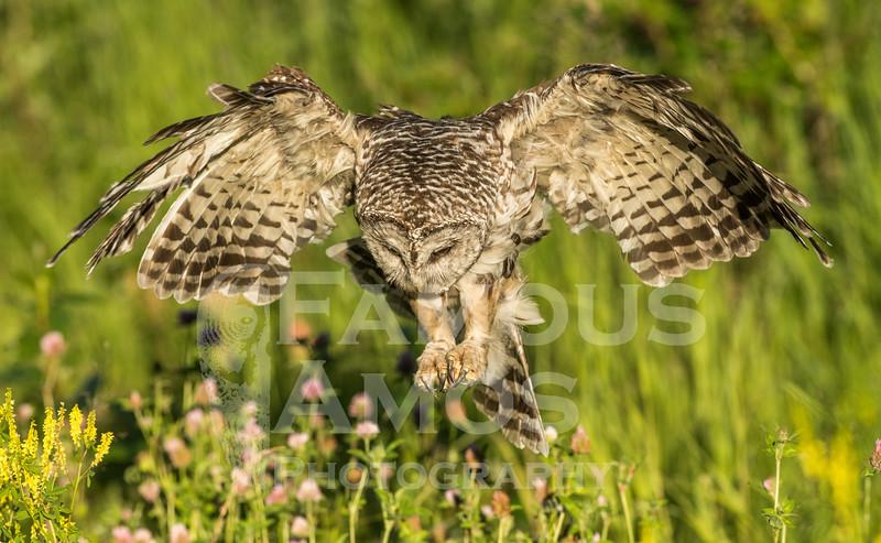 OWL_3611