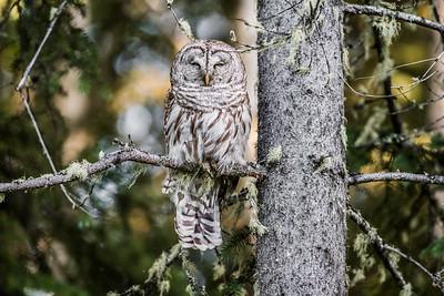 OWL_0278