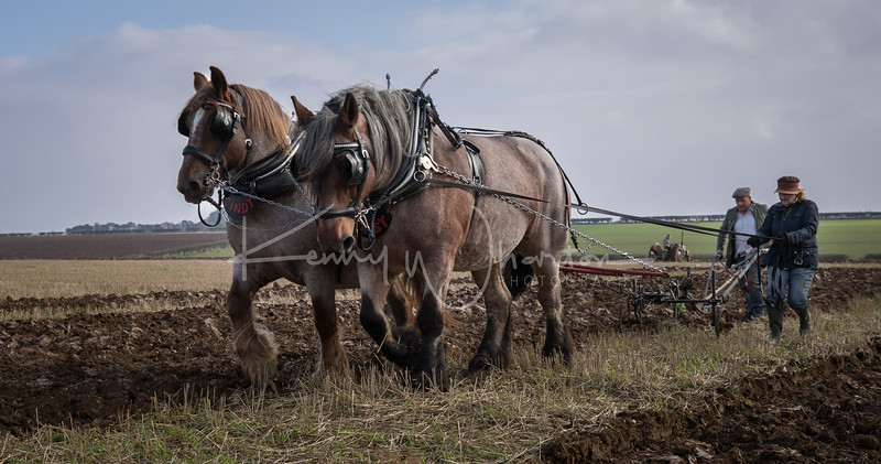 Cindy and Daisy ploughing