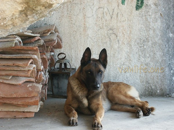 Malinois Lex, Greece 28-05-2004