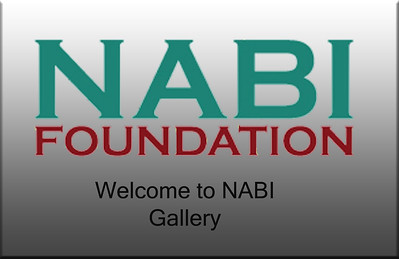 2011 NABI Pool Party