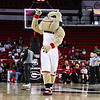 Hairy Dawg during the Lady Bulldogs' game against Tennessee at Stegeman Coliseum in Athens, Ga., on Sunday, February 5, 2017. (Photo by Cory A. Cole)