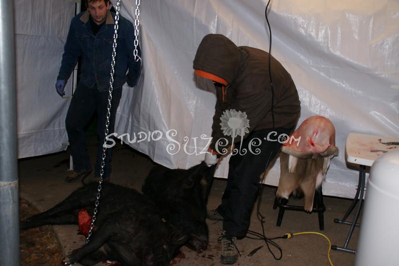 2010, 01-03 Pigs (100)