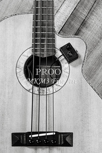 205.1838 Harris Acoustic Bass Black and White