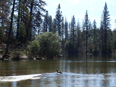 Manzanita Lake and ducks