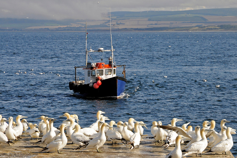 """<div align=""""CENTER"""">16-08-2011 <b>Bass Rock -  Fisher Lassie (the boat that took us there) <i>© Felipe</i></b></div>"""