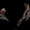 Bats (Costa Rica)