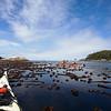 Paddling in thick kelp beds along Batley Island.  Broken Island Group, Barkley Sound, Vancouver Island, British Columbia, Canada
