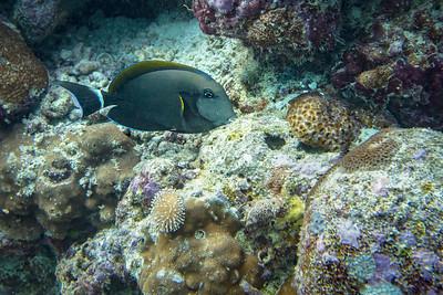Web Maldives-2