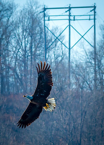 Eagles (Fishing & Fighting)-4
