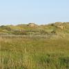 Balmedie beach - 42